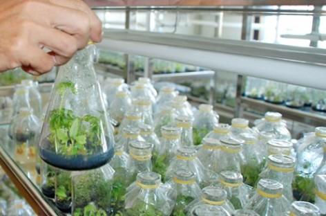 Phát huy tiềm năng nông nghiệp từ công nghệ cao