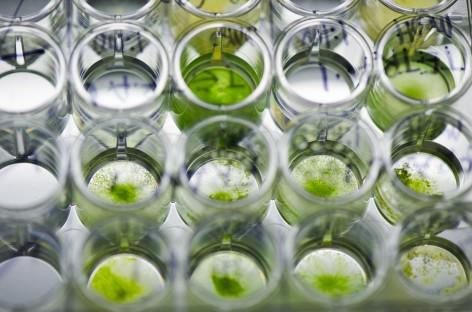 Năng lượng sinh học từ tảo biển ở Úc
