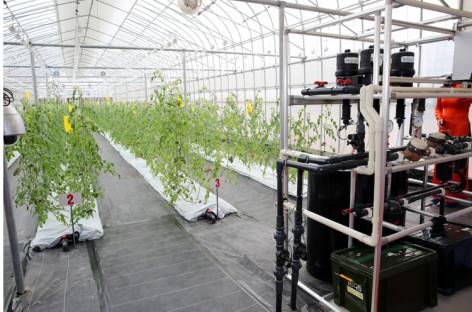 Công nghệ trồng rau tự động