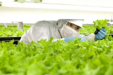 Nhật Bản đang xây dựng trang trại rau với 90% là robot