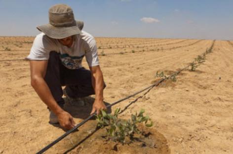 Công nghệ nuôi cá trên sa mạc của Israel khiến cả thế giới khâm phục