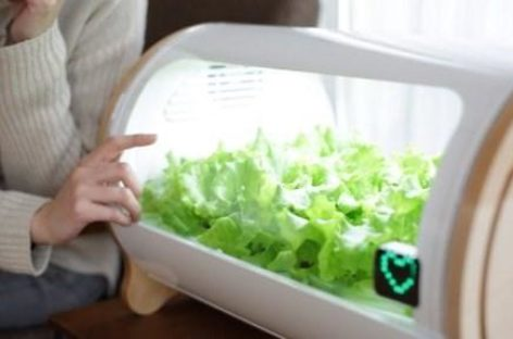 Thiết bị trồng rau sạch tại Nhật Bản